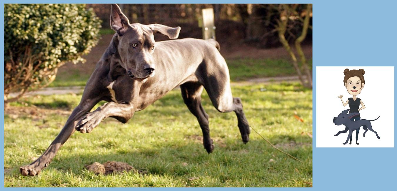 Stadthunde Spa  0176-80087742 Osteopathie und Physiotherapie Hunde am Niederrhein